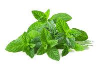 Pročisťující byliny - prodetox