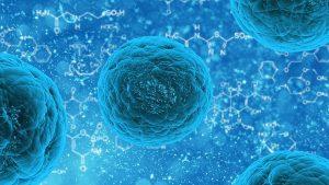Střevní mikroflóra, probiotika