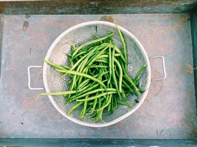 Zelené fazolky, salát