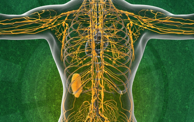 Lymfa, lymfatický systém