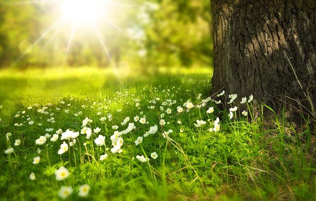 Jarní očista, detoxikace