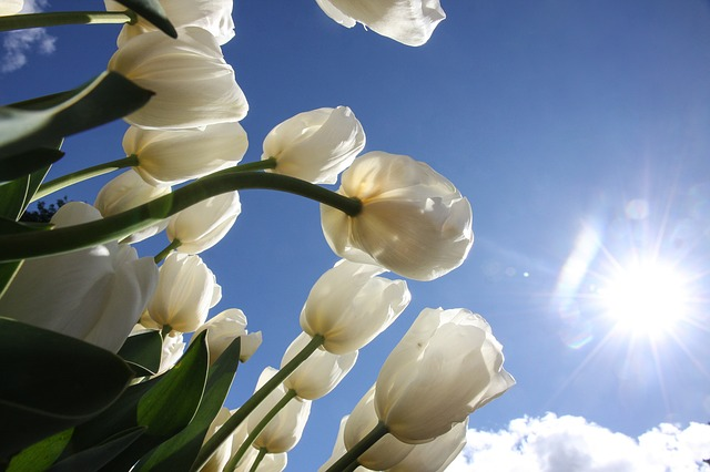 jaro, jarní očista