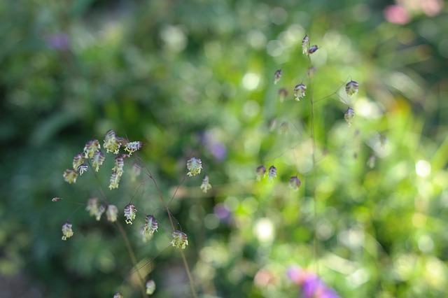 Jarní bylinky na hubnutí
