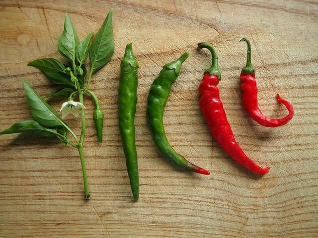 Chilli paparičky mají svůj význam nejen v kulinářství, ale i při léčbě více zdravotních potíží.