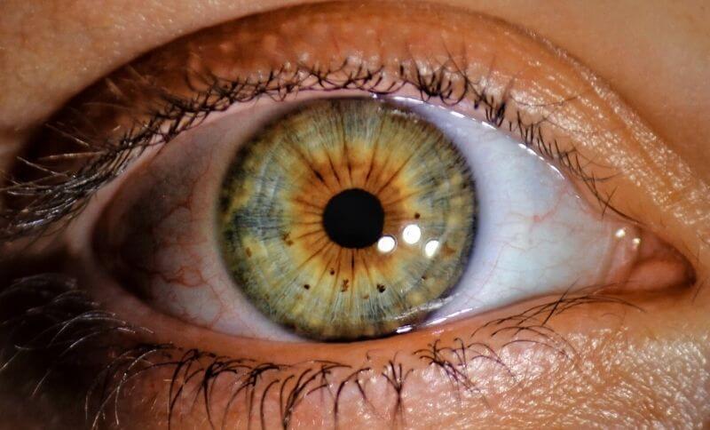 V rohovkovém epitelu oka se nachází kolagen II. typu
